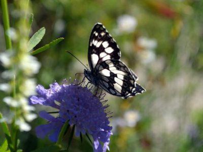 A22 - Completamento indagine sui Lepidotteri