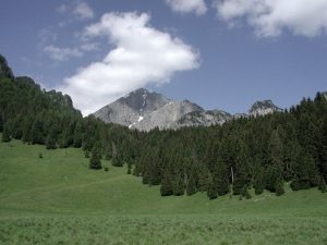 """""""Che bello sarebbe un Parco Nazionale"""". La foresta di Cajada"""