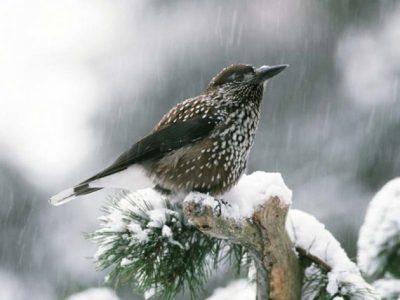 A97 - Biodiversità Alpina: Monitoraggio dell'ornitofauna del Parco Nazionale Dolomiti Bellunesi (2018-2019)
