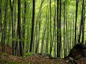 Insilva. Il tempo delle foreste