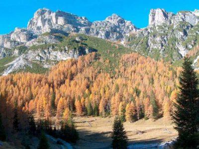 B13 - Dinamismo della vegetazione al limite superiore del bosco nel P.N.D.B.