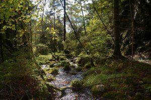 La meravigliosa e accessibile biodiversità della Val Canzoi