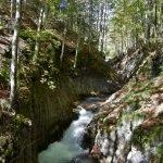 La magica foresta della Val del Grisol